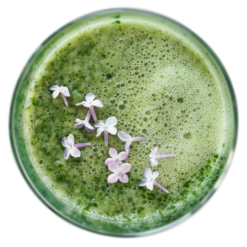 Matcha tea delays aging and fights diseases